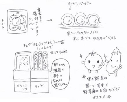 実の野菜の収納法イラスト
